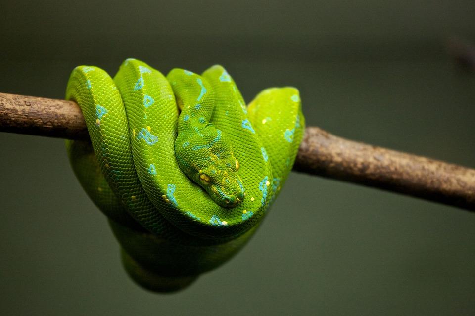 人気No1プログラミング言語Pythonの初め方